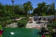 Beach, Flamingos, Ducks, Peacocks, Iguanas, Turtles, Eagle's nest and over 1,000 Koi fish