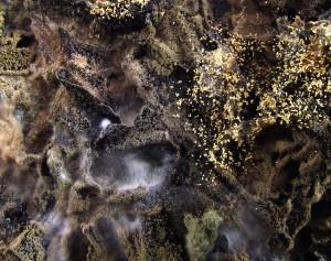 Mold fungus