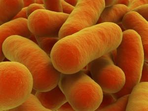 tuberculosis, salmonella, anthrax, dysentery, E. coli, tetanus, malaria, botulism