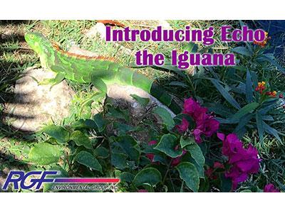 Echo the Iguana