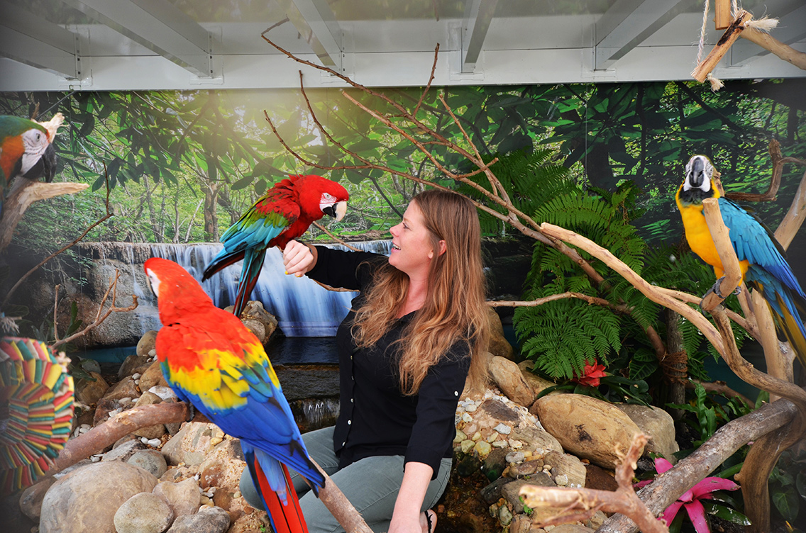 RGF's Macaws