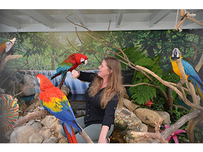 New Macaws added to Envisionland